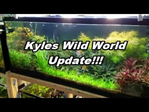 (Kyles Wild World) My Name Change, Updates , And DRAGON EGGS!!!