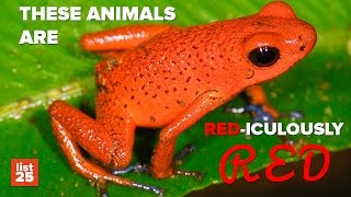25 Amazing RED ANIMALS You NEED To See To Believe