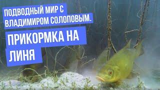 Подводный мир с Владимиром Солоповым Прикормка на линя