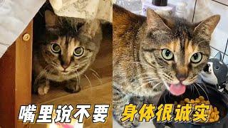 剛收養的流浪貓是個戲精當面拒食還動手打人背地裡卻偷偷乾飯埋頭大吃| 李喜貓