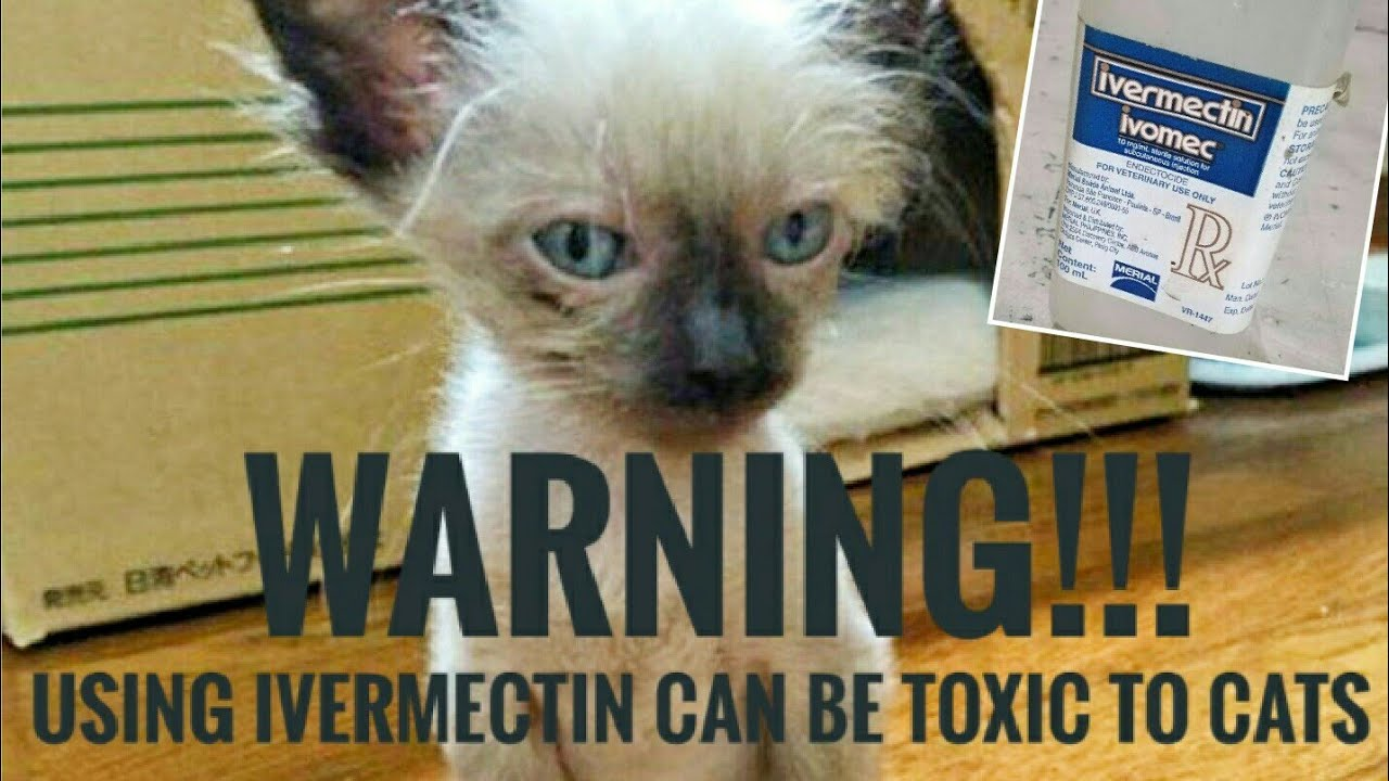 How To Cure Ivermectin Toxicity In Cats Using Mayonnaise