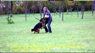 [Подборка] Дрессировка собак. Видео с тренировок