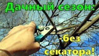 как обрезать деревья в саду  садовый сучкорез GreenWorks GPS7220