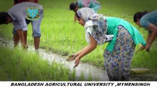 A Documentary on Bangladesh  Agricultural University   bY   Maasranga Television part 01