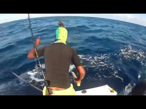 Old Men and the Sea Addu Game Fishing Gan Maldives Sport Trolling