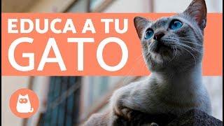 Consejos para educar un gato