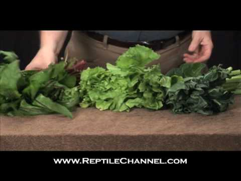 Tortoise Feeding and Nutrition - ReptileChannel.com