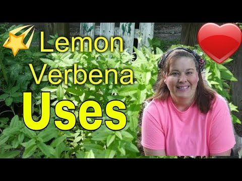 Lemon Verbena  benefits    and What to Do With it?