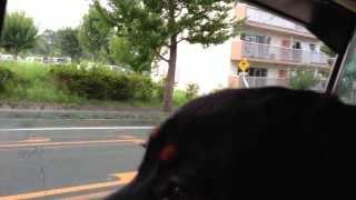 生後7ヶ月の愛犬ハルが、初めてケージ無しでワゴニアに乗りました。 揺...
