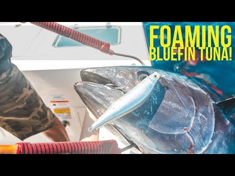 Foaming Bluefin Tuna Feeding Frenzy GIANT Tuna Blowup!  Megabass Trigya Pencil