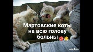 Мартовский кот. Коты и кошки гуляют. День кошек - веселуха