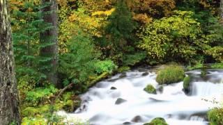 Озера и реки 7(Делайте видео из своих фотографий на ресурсе http://zdepthing.com/ru Присылайте нам на 0062@bk.ru Красивые ролики из фотог..., 2013-08-08T05:51:53.000Z)
