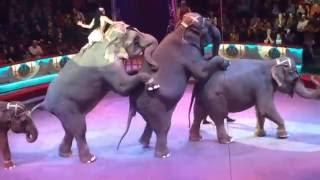 Цирк Никулина на Цветном. Супер представление в цирке со слонами.