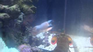 peacock mantis shrimp vs. mithrax crab