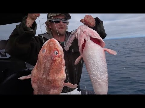 Offshore Fishing Hokitika Trench South Island New Zealand With Josh James And Friends