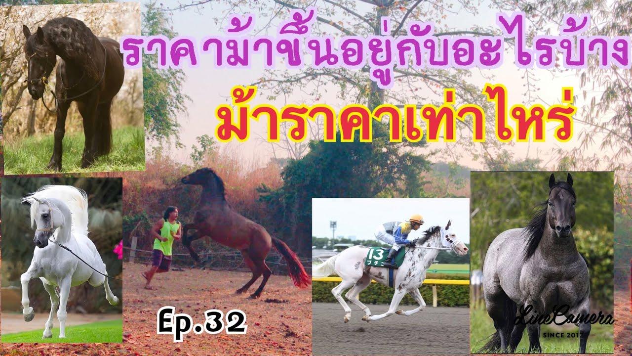 ม้าราคาเท่าไหร่ สายพันธุ์ สายเลือด นิสัย ส่วนสูง ความสามารถของม้า คือองค์รวมราคาม้า Ep.32