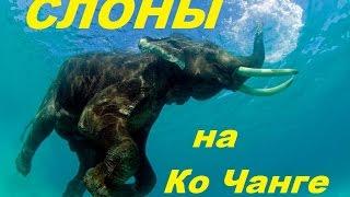 Тайланд - СЛОНЫ на Ко Чанге. Все про слонов на канале про путешествия / Elephants in Thailand