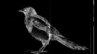 Под ракитою зеленой - Black Raven (Russian Folk)