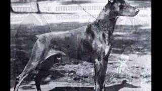 Pictorial History Of The Dobermann