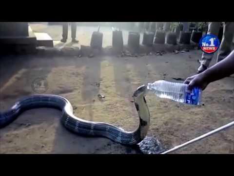 Exclusive Visual | Snake Drinking Water in Karnataka || No.1 News