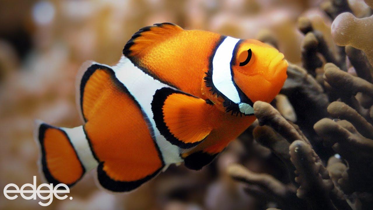 Do fish sleep youtube for How do fishes sleep