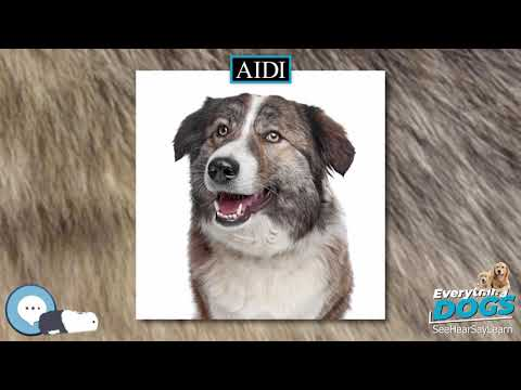 Aidi 🐶🐾 Everything Dogs 🐾🐶