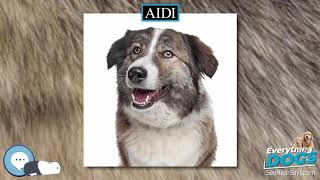 Aidi  Everything Dogs