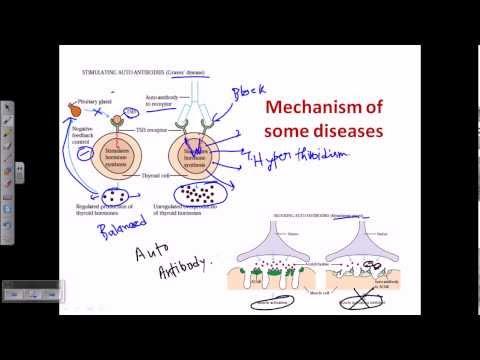 Autoimmunity (self immunity)