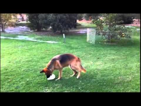 Keeping your dogs entertained