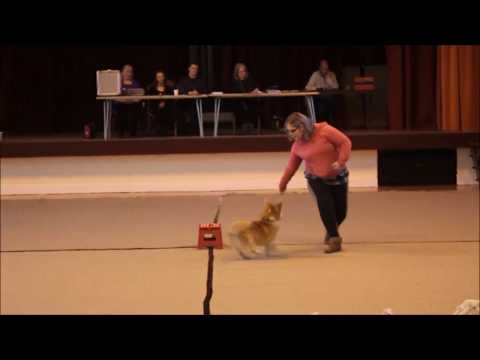 Russell The Dancing Corgi Freestyle - This Will Be - Kent Fun Show
