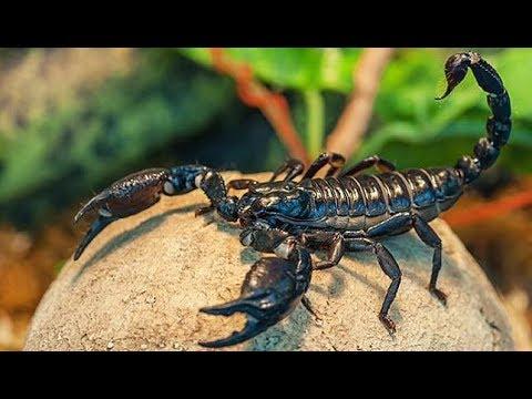 สารคดี เสน่ห์สัตว์โลก ตอน สุดยอดสัตว์มีพิษ คลังอาวุธสัตว์โลก 1