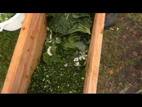 Как сделать крошево из зеленых листьев капусты видео