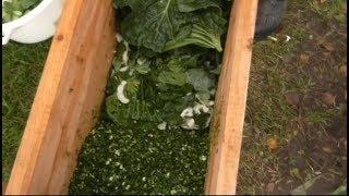 Крошево на зиму. Как солить крошево из зелёных листьев капусты