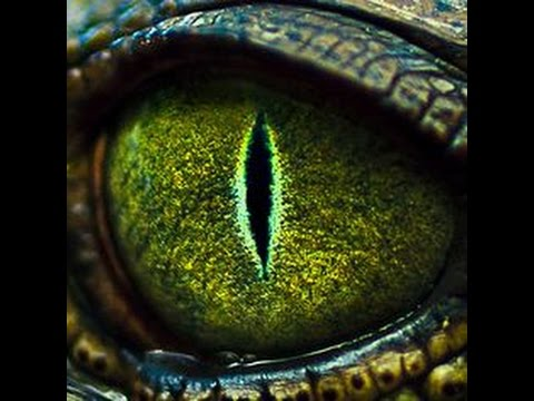 Gallery For gt Reptile Eyes Close Up