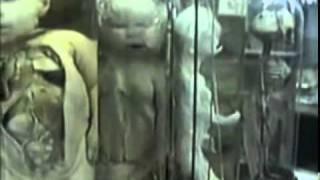 Özdalga - Sacrilege (Instrumental Metal)