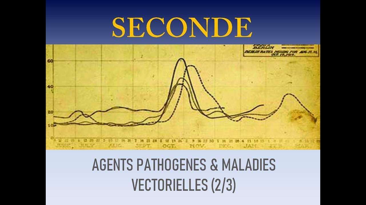 epidemiologia fascioliazei și opistorhiozei