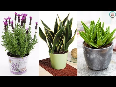 must-have-these-6-plants-for-your-bedroom,-will-cure-insomnia-and-sleep-apnea