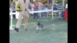 This Video Previously Contained A Copyrighted Audio Track. Due To A Claim By A Copyright Holder, The Audio Track Has Been Muted.     Big Ben's Kennel-schnauzer Club Argentino Dog Show In Mendoza