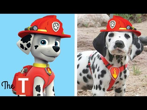 Thumbnail: 10 PAW PATROL Dogs In Real Life