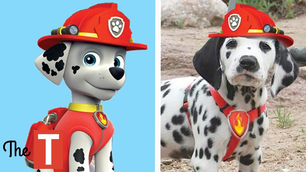 10 PAW PATROL Dogs In Real Life - YouTube 25d13a512