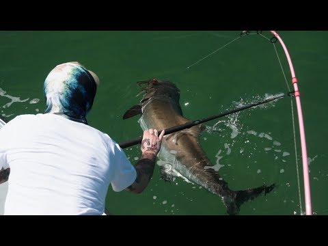 All Time COBIA FISHING!  |  Sight Casting Monsters