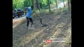 King Cobra Caught In Aralam Kannur