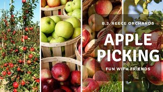 Apple Picking in USA | BJ Reece Orchards | Indian Tamil Vlogs
