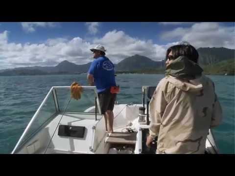 Fish Forever -- Tagging Jacks (Student Version)