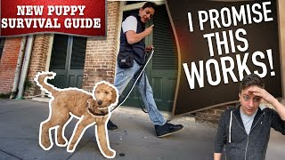 How To Train Your Dog to Walk on Leash WITHOUT Embarrassing You!