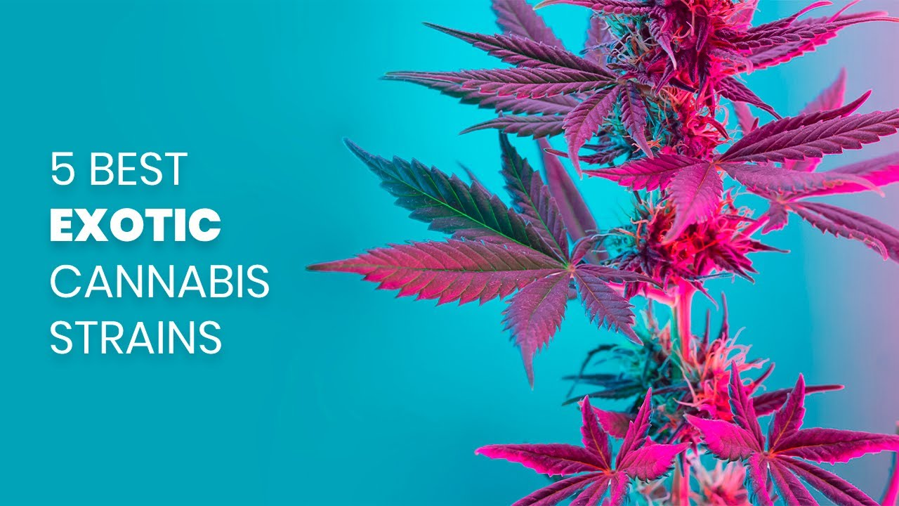 The 5 Best Exotic Cannabis Strains
