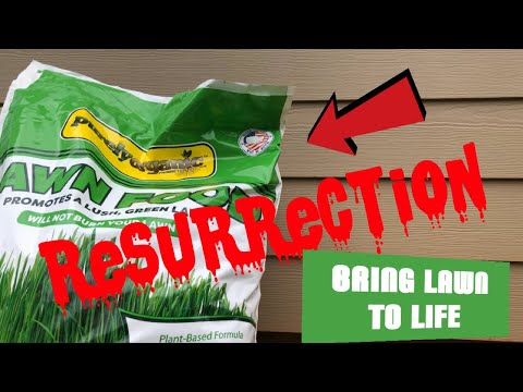 The Resurrection of your Bermuda Lawn plus Purely Organic Lawn food, Bring Lawn to Life