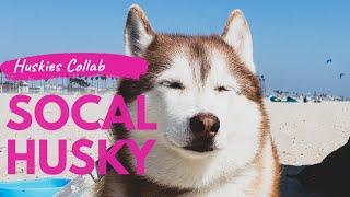 California Husky vs. Florida Husky | HUSKIES AROUND THE WORLD | Collab with Sixty Formula