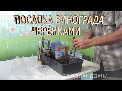 Соседство овощей в теплице: видео-инструкция по