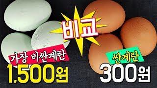 1,500원짜리 계란vs 300원짜리 계란 비교. 가장…